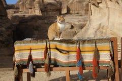 Jordan Petra Ginger Cat Lizenzfreie Stockbilder