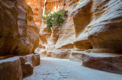 Jordan, Petra, gorge Stock Photography