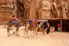 Jordan, Petra. Souvenir trade, camel riding Stock Image
