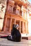 Jordan Petra Treasury Cat Stockfotos