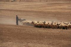 Jordan shepherd. With his own flock Stock Photo