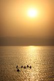 Jordan: Tourists floating in Dead Sea Stock Photography