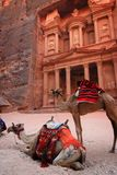 Jordan: Treasury in Petra. Treasury, one of the tombs in the ancient city of Petra in Jordan. Camels are waiting for the customers to take a ride Stock Photo