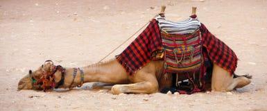 Jordanië - Petra Stock Foto