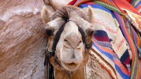Jordanië - Petra Stock Fotografie
