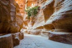 Jordanië, Petra, kloof Stock Fotografie