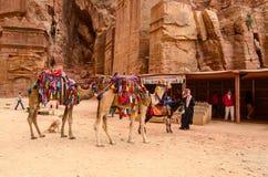 Jordania, Petra Pamiątka handel, wielbłądzia jazda Obraz Stock