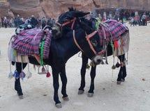 Jordania, Petra - Styczeń 4, 2019 Ja patrzeje jak miłość fotografia royalty free