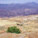 Jordanian landscape Royalty Free Stock Photography