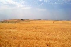 Jordanian Plains. Beautiful scenery of the Jordanian Plains royalty free stock photos
