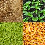 Jordbruk är guld-, artikel Arkivfoto
