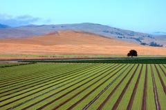 jordbruk royaltyfria foton