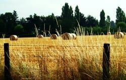 jordbruk Royaltyfri Fotografi