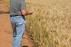 jordbruk royaltyfri foto