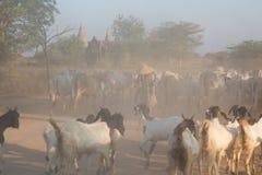 Jordbruk av Myanmar Fotografering för Bildbyråer