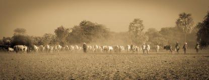 Jordbruk av Myanmar Arkivbild