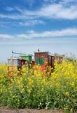 Jordbruk canolaväxt i vår Royaltyfri Fotografi