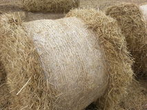 Jordbruk för sugrörhöglantgård Royaltyfria Foton