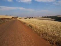 Jordbruk för växt för guling för vetefält lantligt sädes- Royaltyfri Fotografi