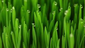 Jordbruk: 4 faser av organisk mat för tillväxt stock video