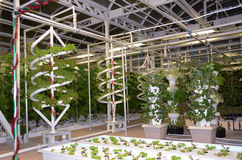 Jordbruk för grönsaker för rör växande modernt Royaltyfri Foto