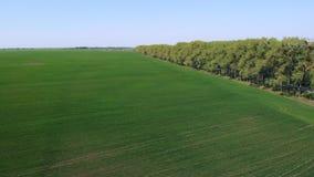 Jordbruk Grönt fältantennskott arkivfilmer