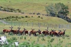Jordbruk i Nya Zeeland NZ NZL Royaltyfri Fotografi