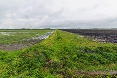 Jordbruk i polder. Arkivfoto