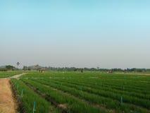 Jordbruk i Thailand Royaltyfri Foto