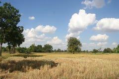 Jordbruk lantgård, ris, thailändska bönder, Dipterocarpus alatus Arkivfoto