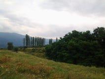Jordbruk och skogar Arkivfoton