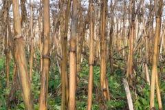 Jordbruk skadad havreväxt i fältet, skördtid royaltyfria bilder