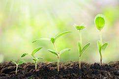 Jordbruk växande växter Växtplanta Handen som fostrar och bevattnar som är ung, behandla som ett barn växter som växer i groendef fotografering för bildbyråer