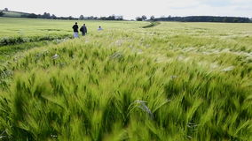 Jordbruk - vind - skörd av korn