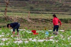 Jordbruks- arbetare i fältet Vietnam arkivbild