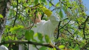 Jordbruks- arbetare som besprutar träd med bekämpningsmedlet arkivfilmer