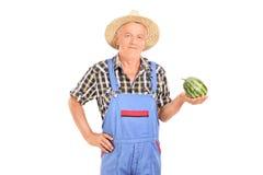 Jordbruks- arbetare som rymmer en mycket liten vattenmelon Royaltyfri Bild