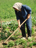 jordbruks- arbete Royaltyfria Foton