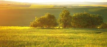 Jordbruks- bakgrund i varma signaler royaltyfri bild