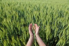 jordbruks- begrepp Arkivbilder