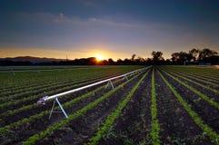 jordbruks- bevattningsprinkler royaltyfria bilder