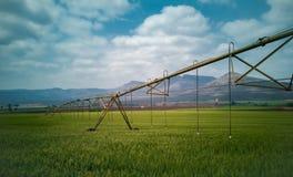 Jordbruks- bevattningsystem som bevattnar ett grönt vetefält royaltyfria bilder