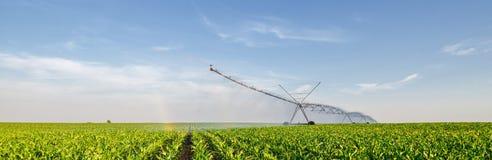 Jordbruks- bevattningsystem som bevattnar havrefältet i sommar royaltyfri foto