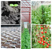 jordbruks- collage royaltyfri bild