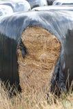 Jordbruks- emballerade sugrörbaler Arkivfoto