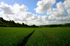 jordbruks- fält Royaltyfria Bilder