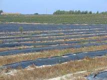 Jordbruks- fält arkivfoto
