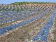 Jordbruks- fält royaltyfria foton