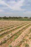 jordbruks- fält Royaltyfri Bild