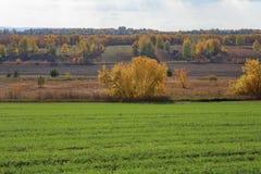 Jordbruks- fält i Europa royaltyfri foto